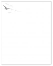 Faire-part oiseau