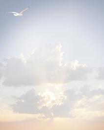 Rouwbrief dubbel meeuw in de wolken