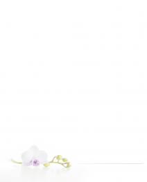 Faire-part double orchidée
