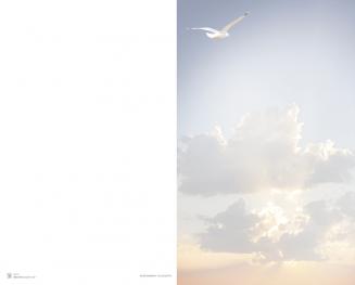 Carte double mouette dans les nuages