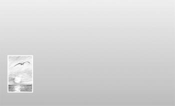 Carte simple avec oiseau et mer sur fond gris