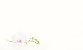 Carte simple orchidée