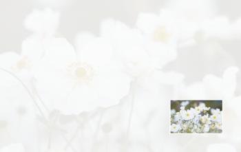 Carte de remerciement fleurs