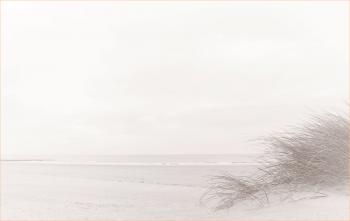 Bedankingskaart duinengras