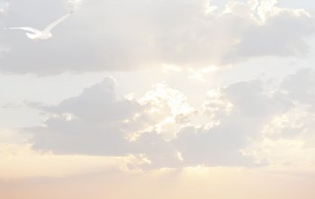 Bedankingskaart meeuw in de wolken