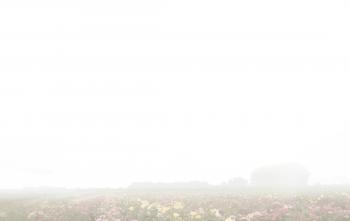 Carte de remerciement champ de roses