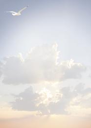 Rouwbrief A4 meeuw in de wolken
